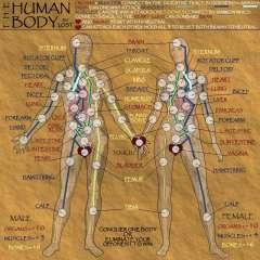human_body_large